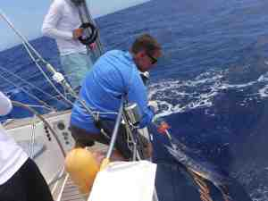 The elusive Blue Marlin, jr.  We released him!